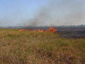 Kebakaran savana TNRAW