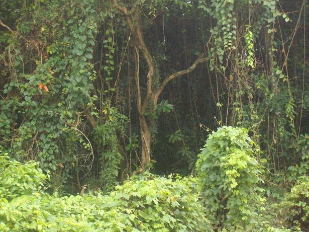 Ekosistem Hutan TNRAW (Sugiarto, 2010)