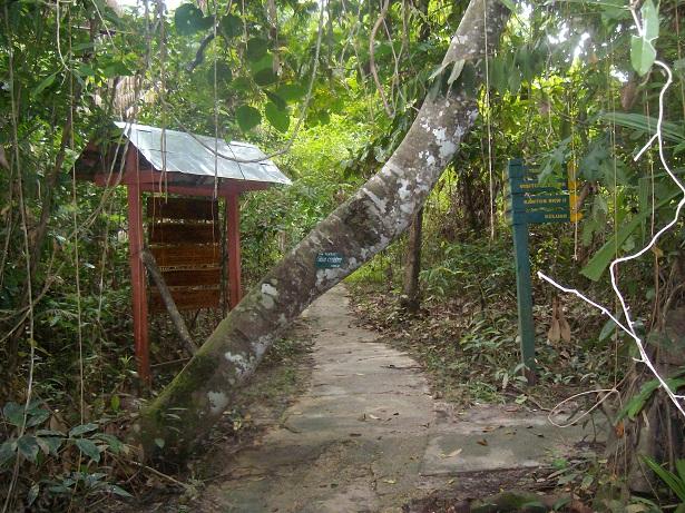 Track wisata Hutan Pendidikan Tatangge