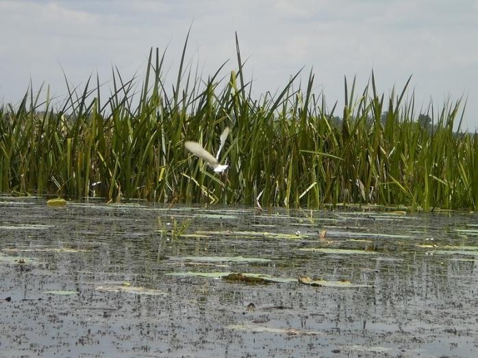 Mengamati aktivitas burung air (Sugiarto, 2010)