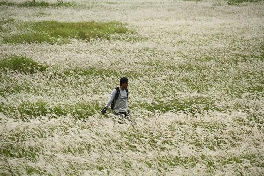 Menikmati savana TN Rawa Aopa Watumohai pada musim berbunga