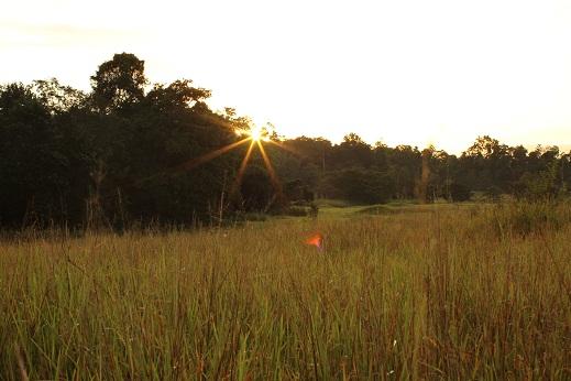Menikmati sunset di savana TN Rawa Aopa Watumohai
