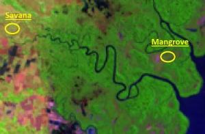 Metode visual dengan mudah membedakan bakau muda dan jarang terhadap savana (Sumber gbr : Citra Landsat Taman Nasional Rawa Aopa Watumohai 2013)