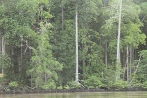 Sepanjang perjalanan menikmati hamparan mangrove yang masih alami, lebat dan indah. Manuver katinting di kelokan-kelokan sungai memberi nuansa tersendiri.
