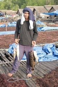 Perjuangan keras tarik-menarik dengan kerapu dan ikan putih membuahkan hasil, meskipun harus 3 x putus pancing. Tetap semangat ...!!